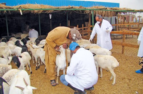 MoAF to collect 7,000 animal samples from various governorates till July