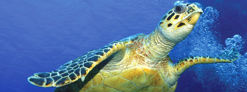 21 tracking devices installed on turtles in Masirah Island