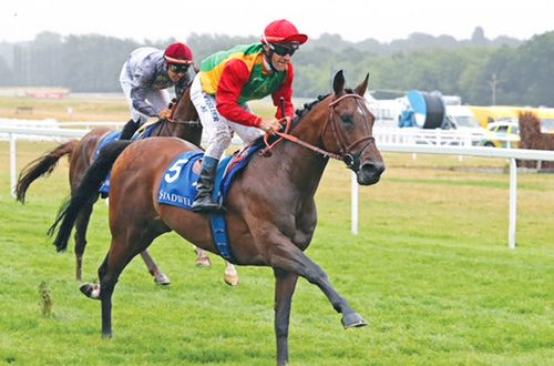 Royal Cavalry wins three cups in UK