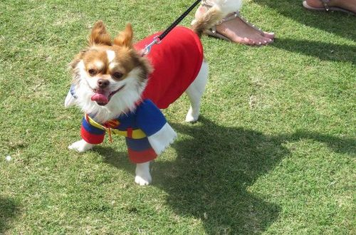 Canines for a Cause event to be held on November 10