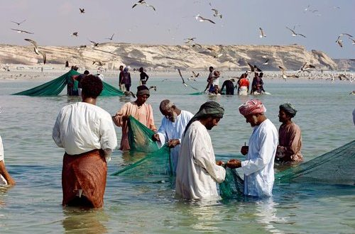 Fisheries exports to contribute RO1.3bn to Oman's GDP in 2023: MoAF