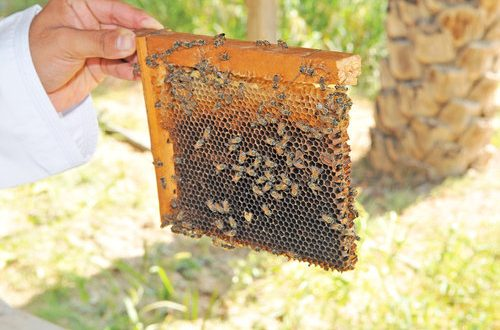 Agreement with FAO boosts bee-keeping sector in Oman