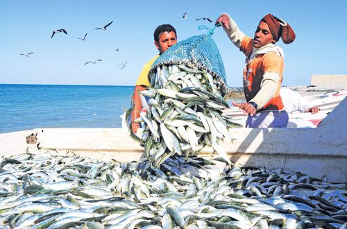 Over 20% increase in fish haul in Oman in first 10 months of 2018