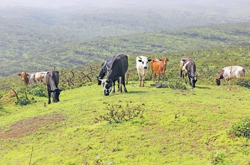 'Mekunu led to rise in animal diseases'