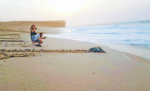 Over 48,000 visited Ras al Jinz turtle reserve last year
