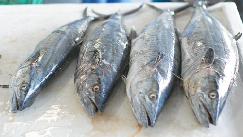 Ministry bans export of kingfish and longtail tuna