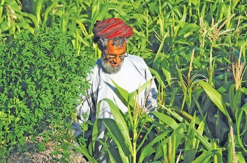 MoSD gives nod for second agriculture association