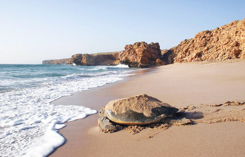 'Protection of turtles shared responsibility of all nations'