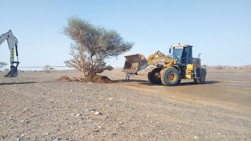 200 wind-uprooted trees replanted in Bidiyah