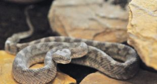 World Snake Day: Know their role, play your part in saving them
