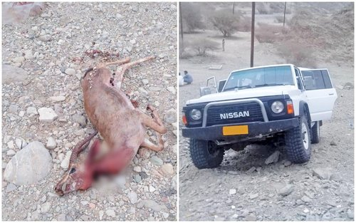 Gazelle poaching: Several arrested in just a month
