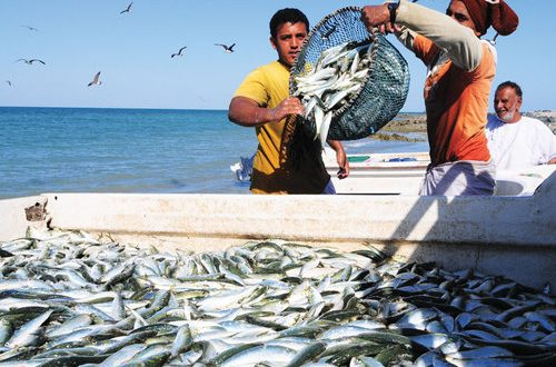 MoAF to develop 3 markets; fish production up by 59%