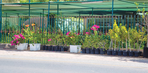 Sun shines on nurseries as summer draws to a close