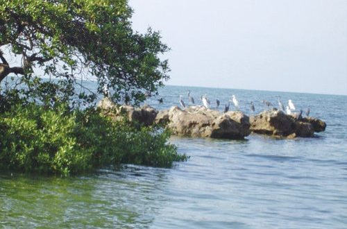 Barr al Hikman to be included under Ramsar Convention sites: MECA